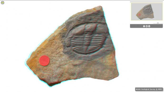 gb3d-type-fossils-online-project